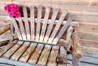 Roses on a wooden bench